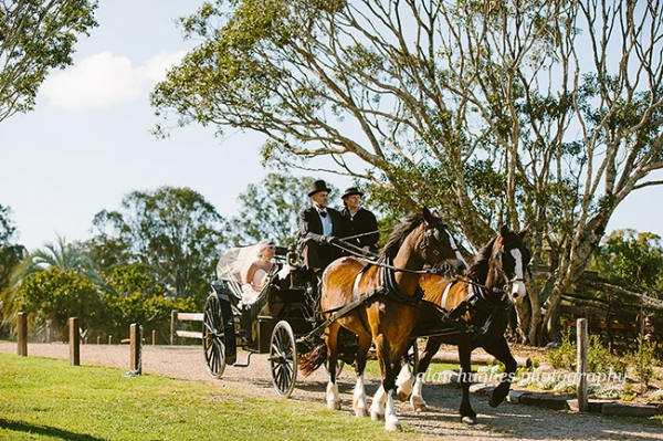 b2ap3_thumbnail_Yandina_Station_wedding_photographer_038.jpg